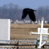 В Одессе анонсировали большое разоблачение «похоронных монополистов»