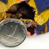 В НБУ сообщили, когда ждать «серьезного» снижения инфляции