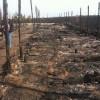 Под Киевом в приюте для животных сгорело 70 собак, подозревают поджог — МВД