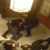 В Херсоне пьяные милиционеры устроили «мордобой» в баре (ВИДЕО)