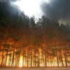 У Путина заподозрили оппозицию в организации лесных пожаров