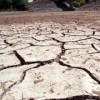 Оккупированный Крым потерял почти половину урожая зерновых – Минагрополитики