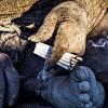 Самый страшный «бомж» в мире. Он не был в душе 60 лет и курит навоз (ФОТО)