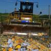 В Крыму тоже взялись за уничтожение запрещенных продуктов