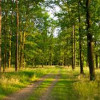 На Киевщине спасают от захвата огороженный лес