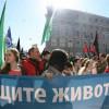 Зоозащитники обвиняют киевскую власть в массовых отравлениях собак