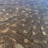 Президент Франции заявил, что не допустит добычи сланцевого газа на территории страны