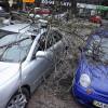 Киевлян попросили убрать машины из-под деревьев из-за надвигающегося урагана