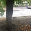 По Луганску бегают бездомные обезьяны (ФОТОФАКТ)