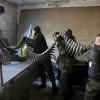 Украинские военные не дали армии РФ организовать «котел» на Луганщине