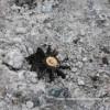 Боевики обстреляли Новотошковку из минометов во время раздачи жителям гуманитарной помощи, — Москаль