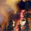 Площадь лесных пожаров в Сибири за сутки увеличилась на 10 тысяч гектаров