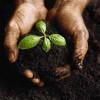 Украина ежегодно теряет 2-3 миллиарда из-за теневого рынка земли
