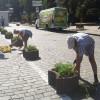 В Киеве часть улицы Институтской стала пешеходной, там высадили чернобривцы